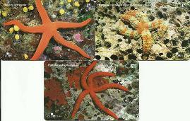 Croatie Lot de 3 cartes étoiles de mer-2